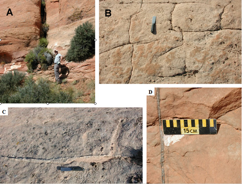 Examples of joints in the Lisbon field area. (A) Large, probable region-scale joint in the Wingate Sandstone over the gas cap. (B) Blocky or rectalinear joint sets in the Navajo Sandstone over the water leg. (C) Thin silica vein in a joint over the water leg. (D) Very thin calcite vein with a halo of possible iron/manganese-bearing minerals over the gas cap. A and D are near the Lisbon No. C-910 well (SW1/4SE1/4 section 10, T. 30 S., R. 24 E., SLBL&M); B and C are near the No. 21-4 Federal well (NW1/4NW1/4 section 21, T. 30 S., R. 24 E., SLBL&M).