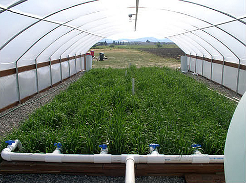 Montana State University plant growth center and horticulture research farm.