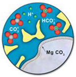 Diagram depicting the formation of minerals on the surface of a rock grain (bottom right of image) as it reacts with the dissolved CO2 in the brine water. The magnesium in the rock grain combines with the CO3 in the water to produce the mineral MgCO3 on the grain's surface.